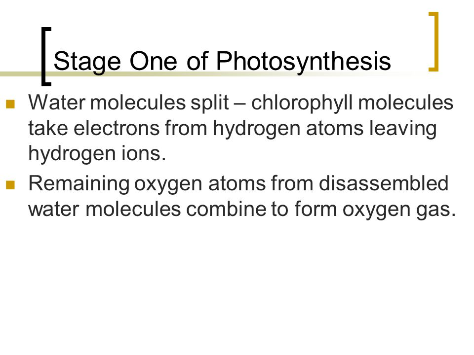 Stage One of Photosynthesis