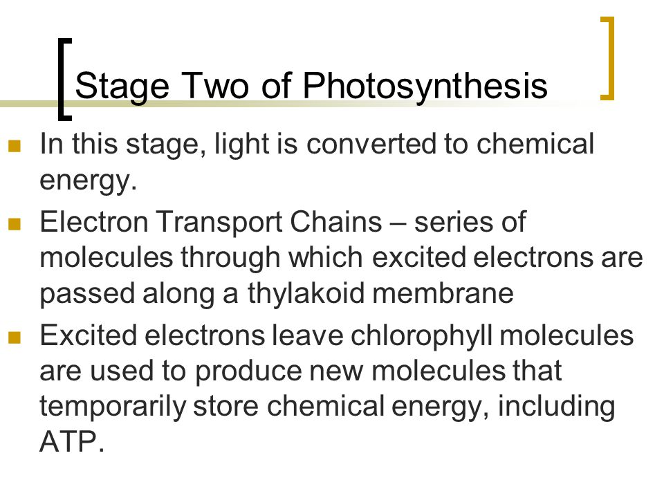 Stage Two of Photosynthesis