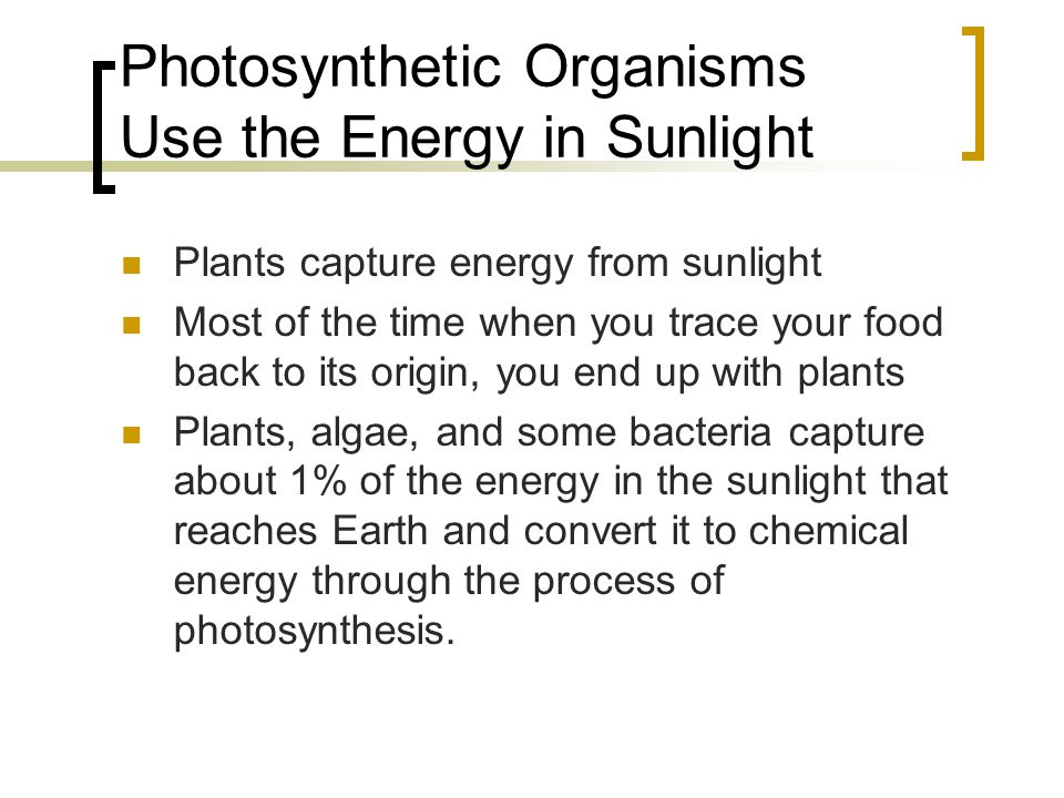 Photosynthetic Organisms Use the Energy in Sunlight