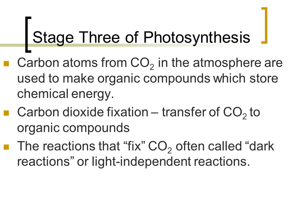 Stage Three of Photosynthesis