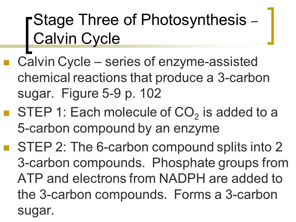 Stage Three of Photosynthesis – Calvin Cycle