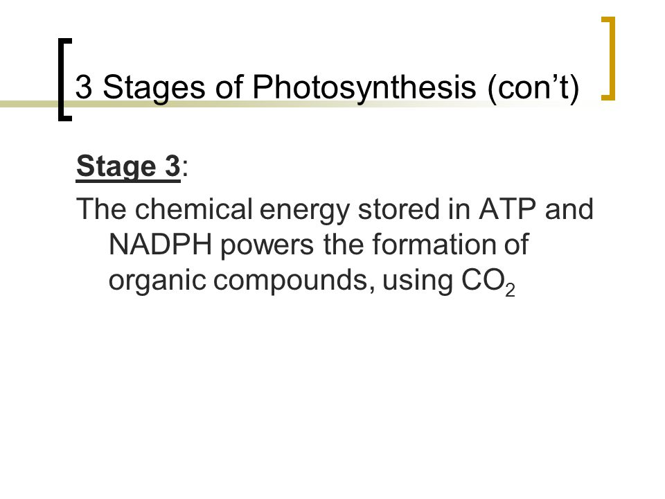 3 Stages of Photosynthesis (con't)
