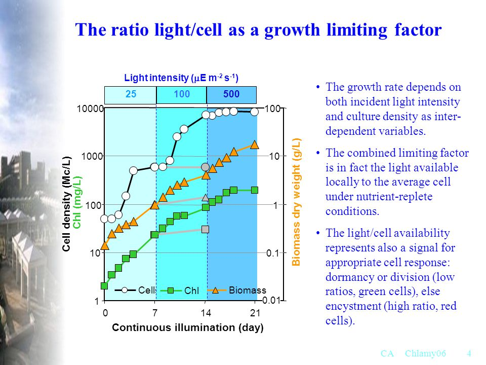 The ratio light/cell as a growth limiting factor
