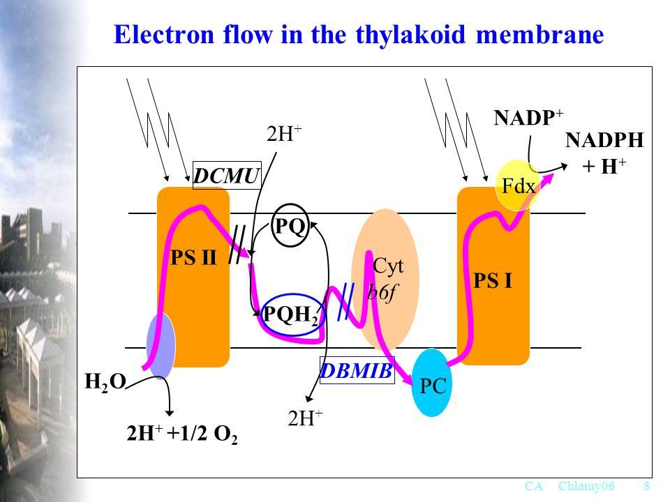 Electron flow in the thylakoid membrane