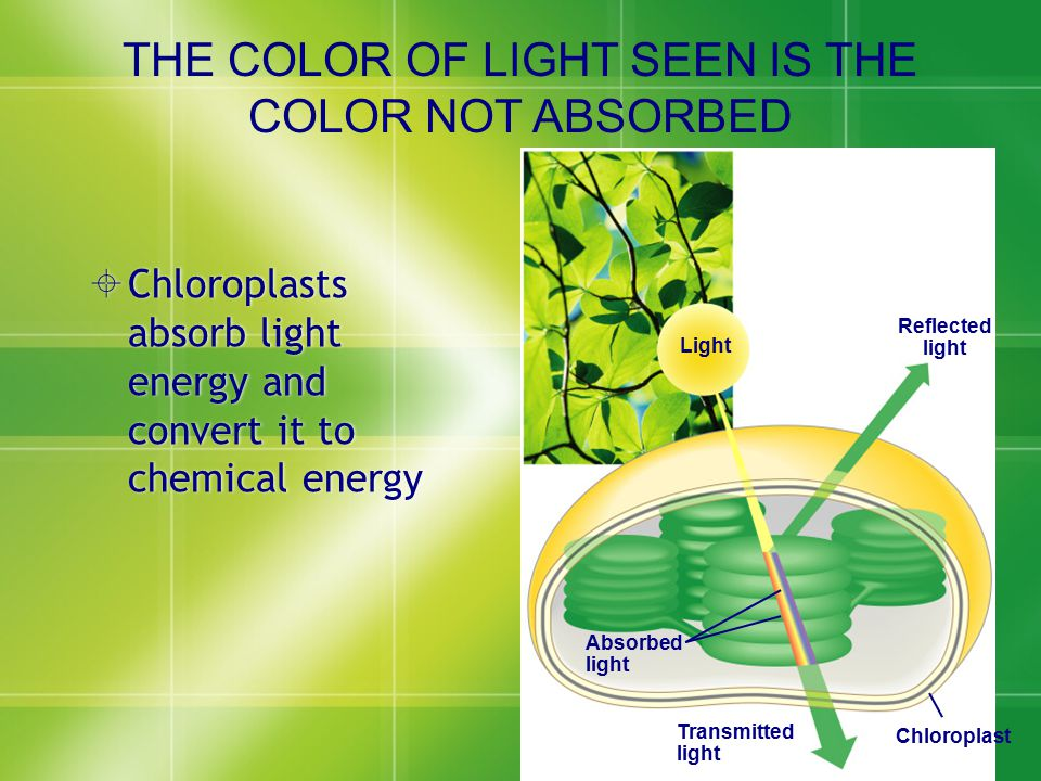 THE COLOR OF LIGHT SEEN IS THE COLOR NOT ABSORBED