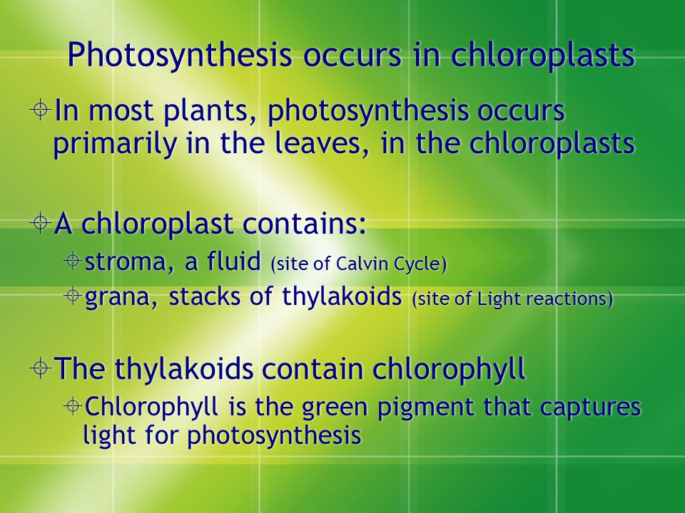 Photosynthesis occurs in chloroplasts