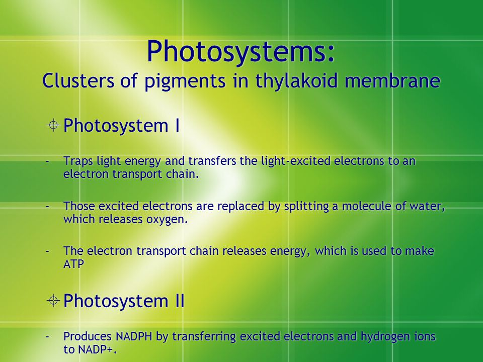 Photosystems: Clusters of pigments in thylakoid membrane