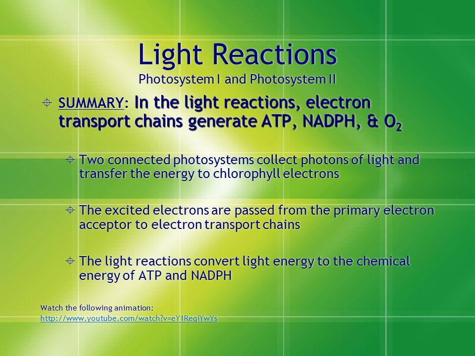 Light Reactions Photosystem I and Photosystem II