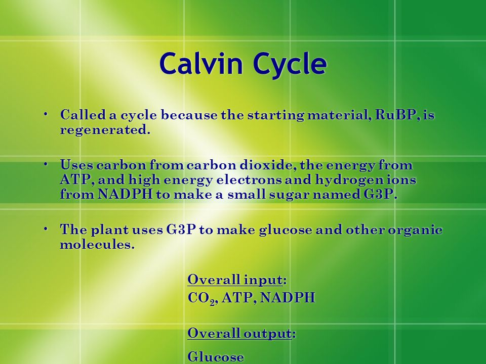 Calvin Cycle Called a cycle because the starting material, RuBP, is regenerated.