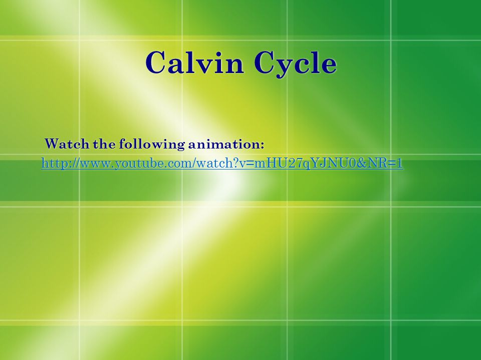 Calvin Cycle Watch the following animation: