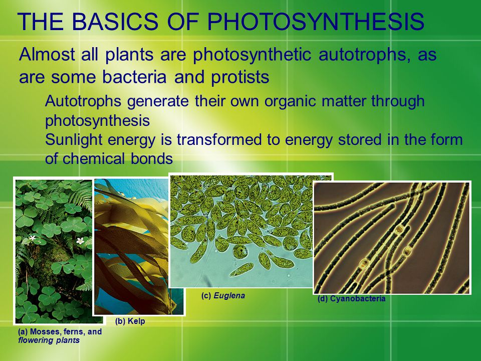 THE BASICS OF PHOTOSYNTHESIS