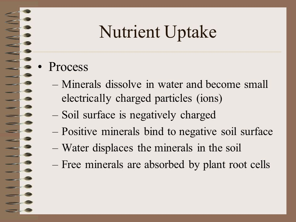 Nutrient Uptake Process