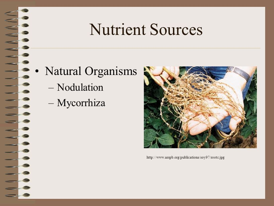 Nutrient Sources Natural Organisms Nodulation Mycorrhiza