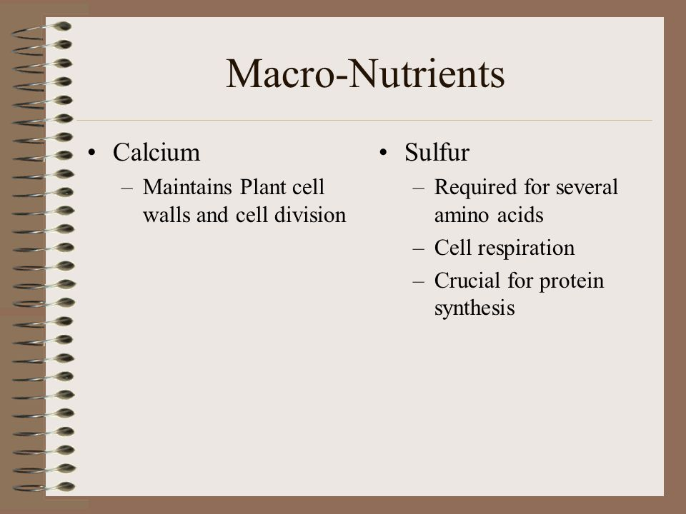 Macro-Nutrients Calcium Sulfur