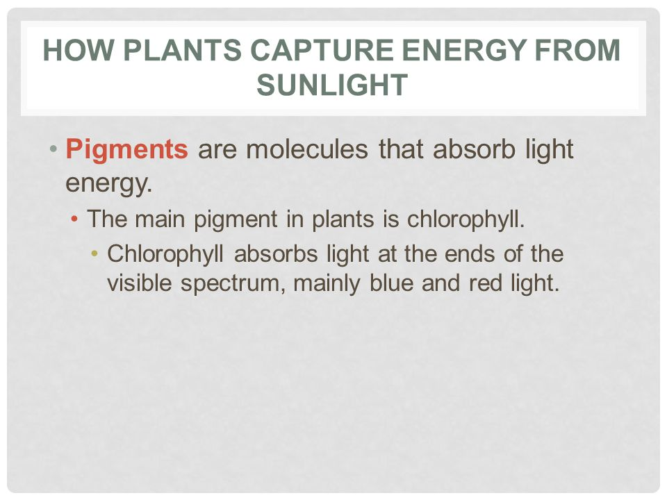How Plants Capture Energy from Sunlight