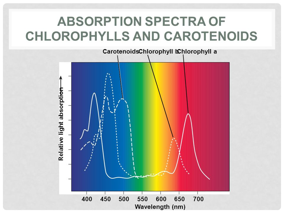 Absorption spectra of chlorophylls and carotenoids
