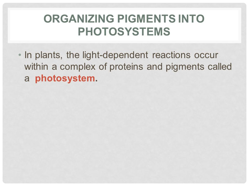 Organizing Pigments into Photosystems