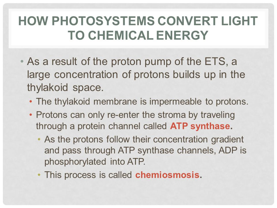 How Photosystems Convert Light to Chemical Energy