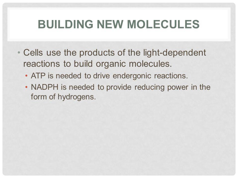 Building New Molecules