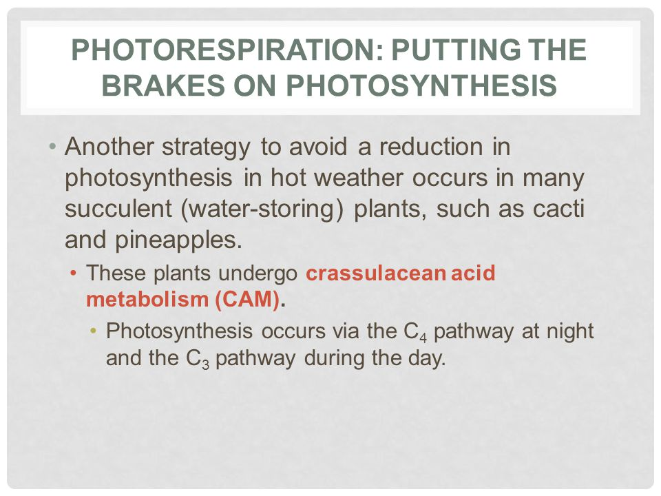 Photorespiration: Putting the Brakes on Photosynthesis