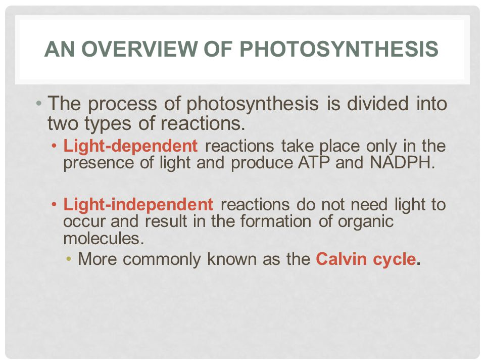 How C3 C4 And Plants Do Photosynthesis