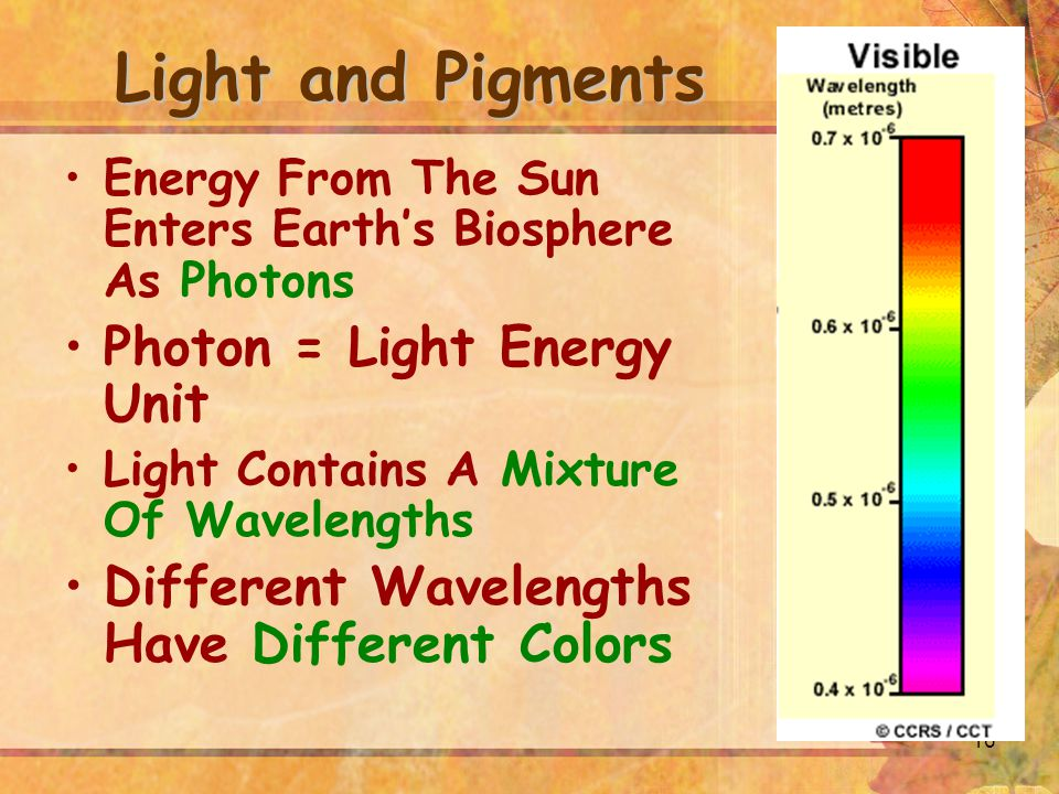 Light and Pigments Photon = Light Energy Unit