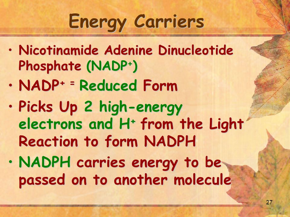 Energy Carriers NADP+ = Reduced Form