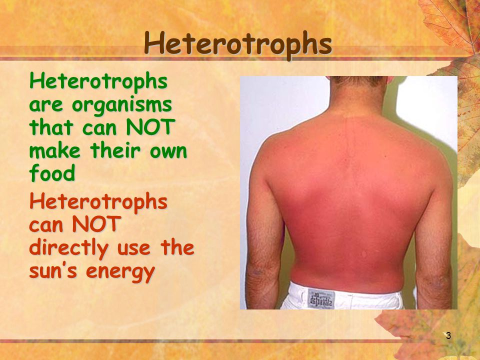 Heterotrophs Heterotrophs are organisms that can NOT make their own food.