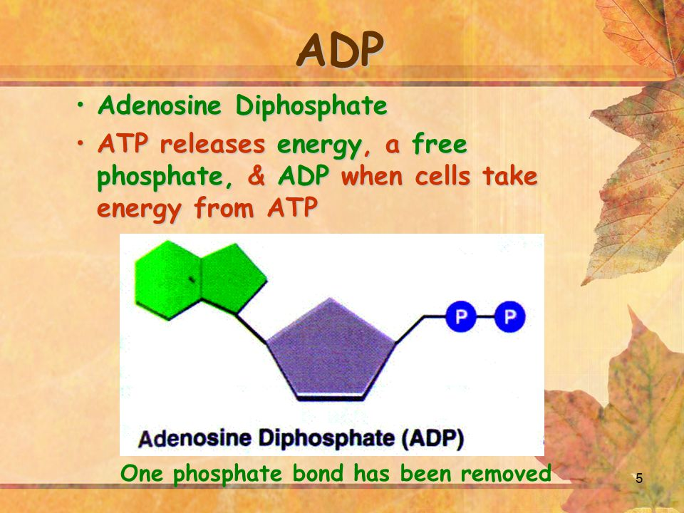 One phosphate bond has been removed