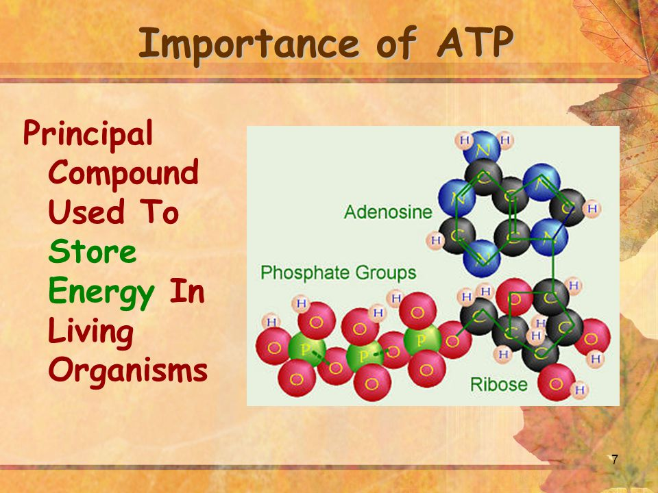 Importance of ATP Principal Compound Used To Store Energy In Living Organisms