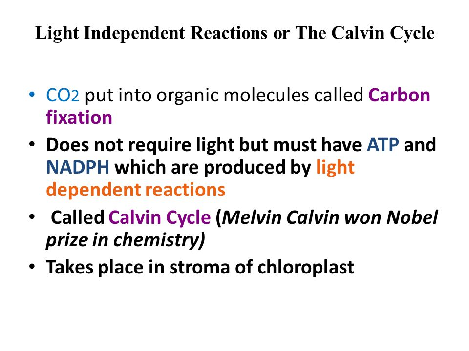 Light Independent Reactions or The Calvin Cycle