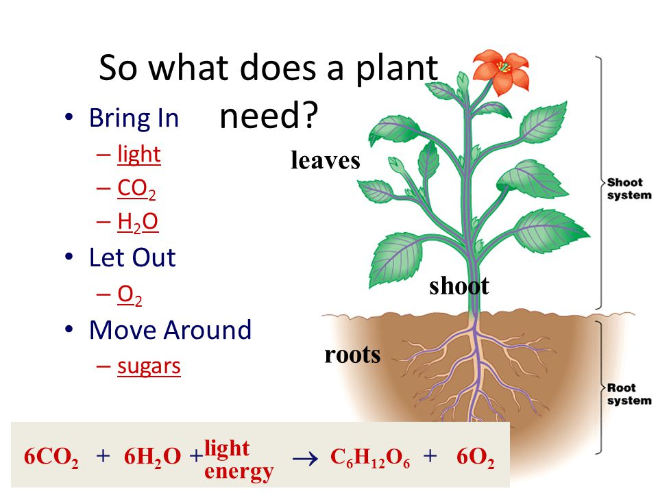 So what does a plant need
