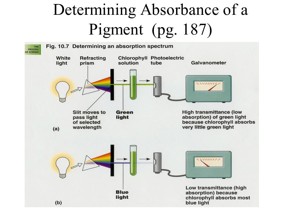 Determining Absorbance of a Pigment (pg. 187)