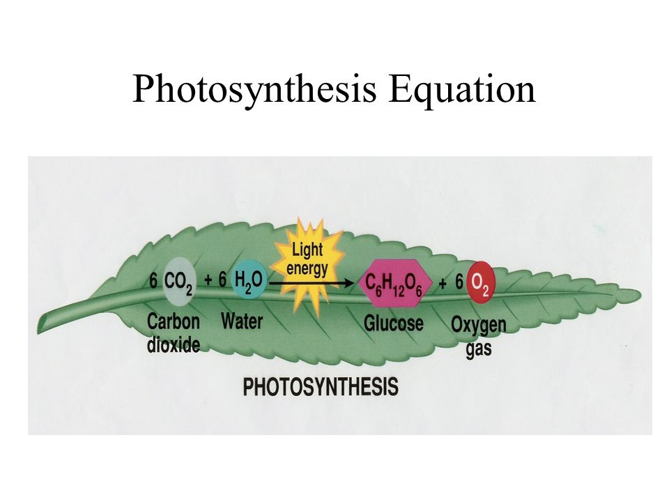 Photosynthesis - Energy efficiency of