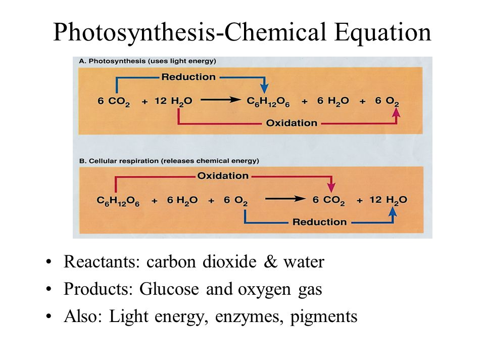 Photosynthesis-Chemical Equation