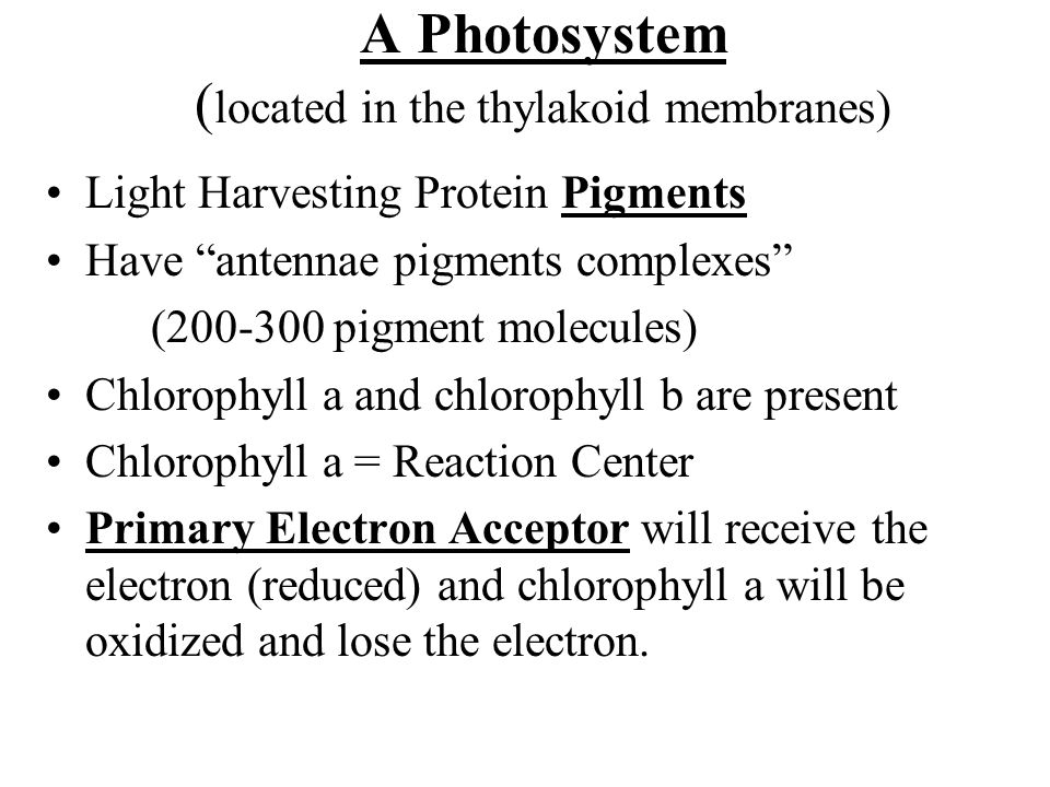 A Photosystem (located in the thylakoid membranes)