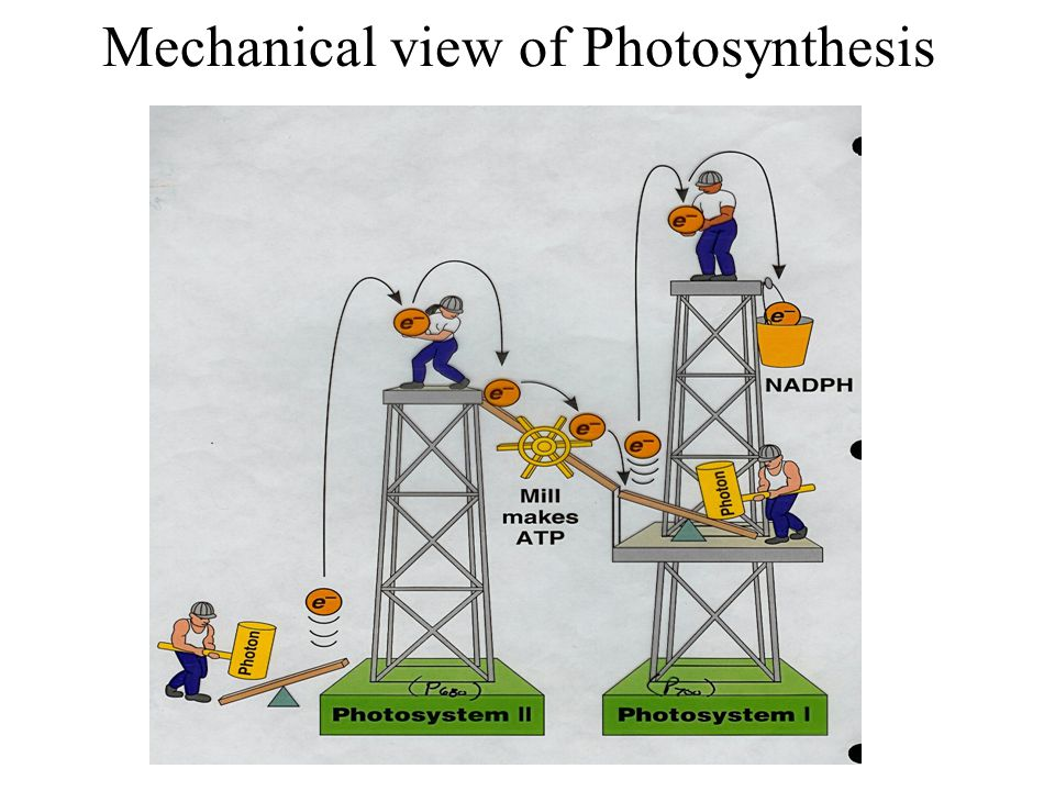 Mechanical view of Photosynthesis