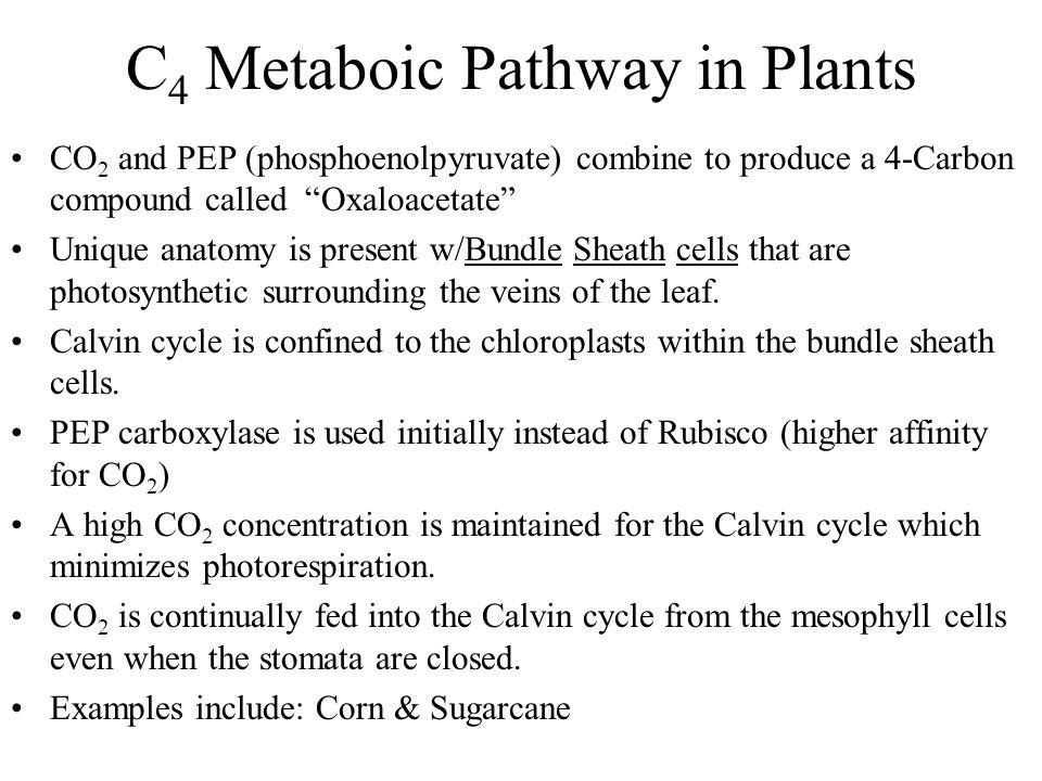 C4 Metaboic Pathway in Plants