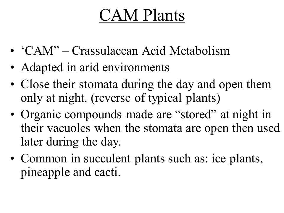 CAM Plants 'CAM – Crassulacean Acid Metabolism