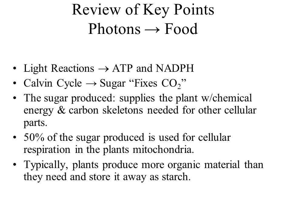 Review of Key Points Photons → Food