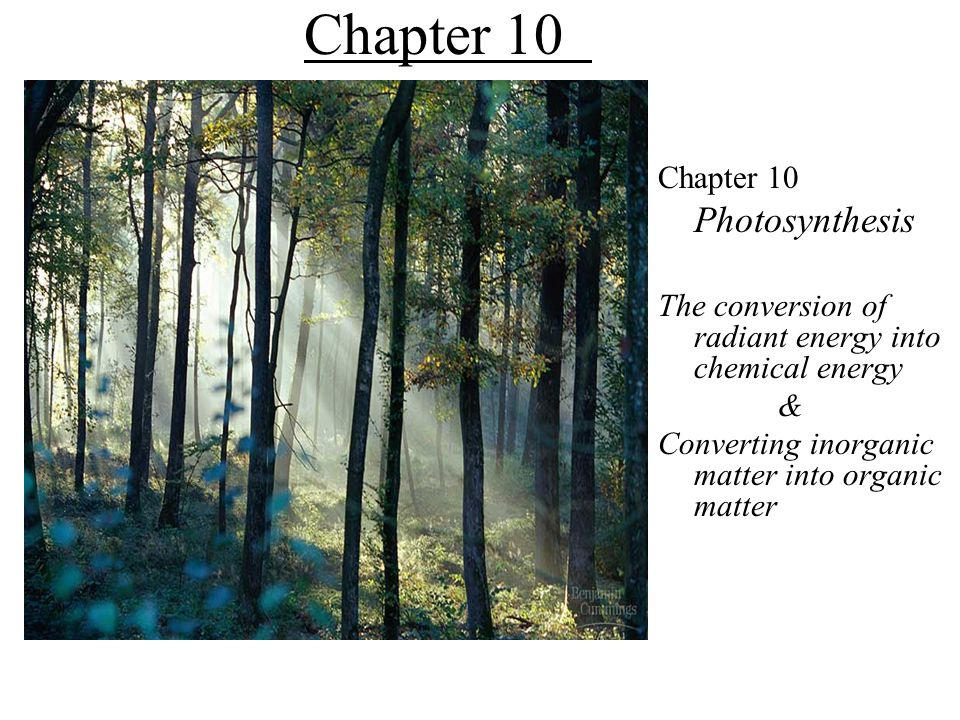 Chapter 10 Photosynthesis Chapter 10