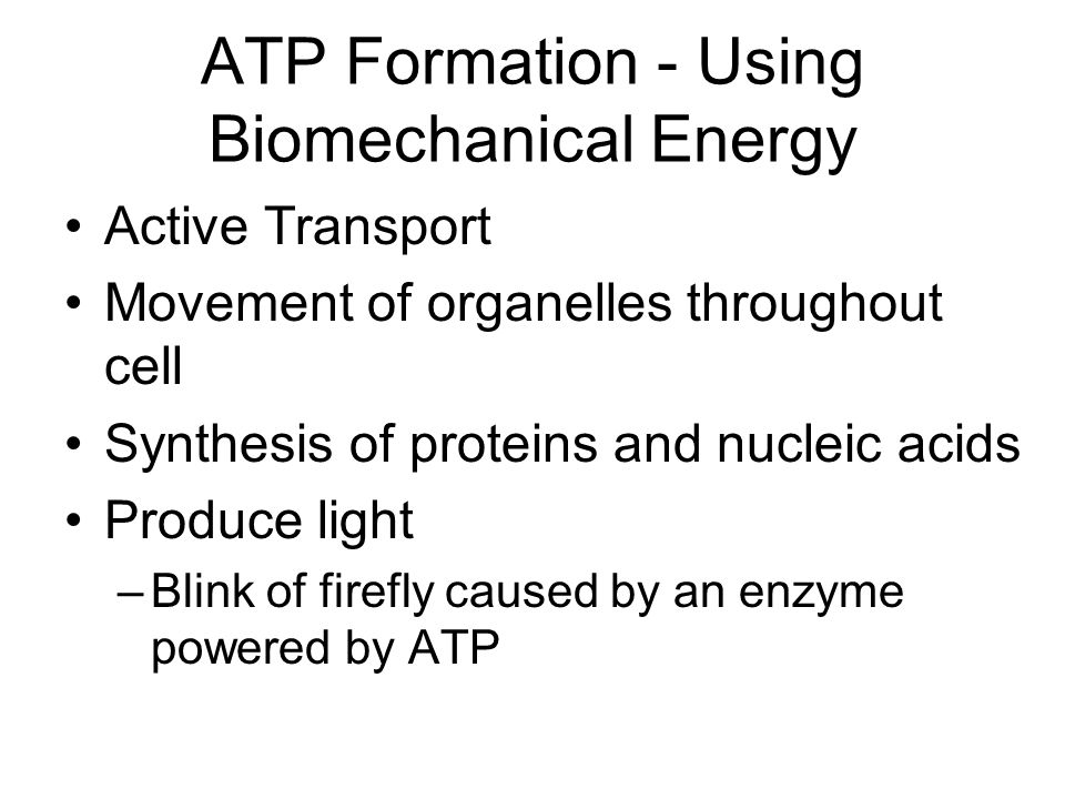 ATP Formation - Using Biomechanical Energy