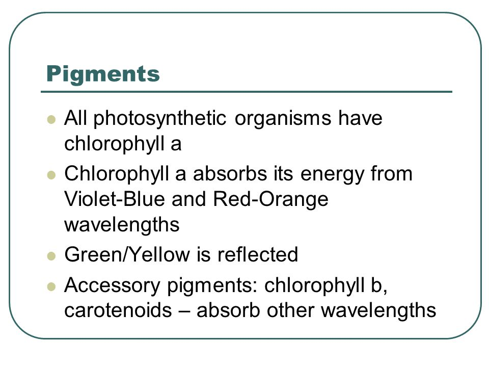 Pigments All photosynthetic organisms have chlorophyll a