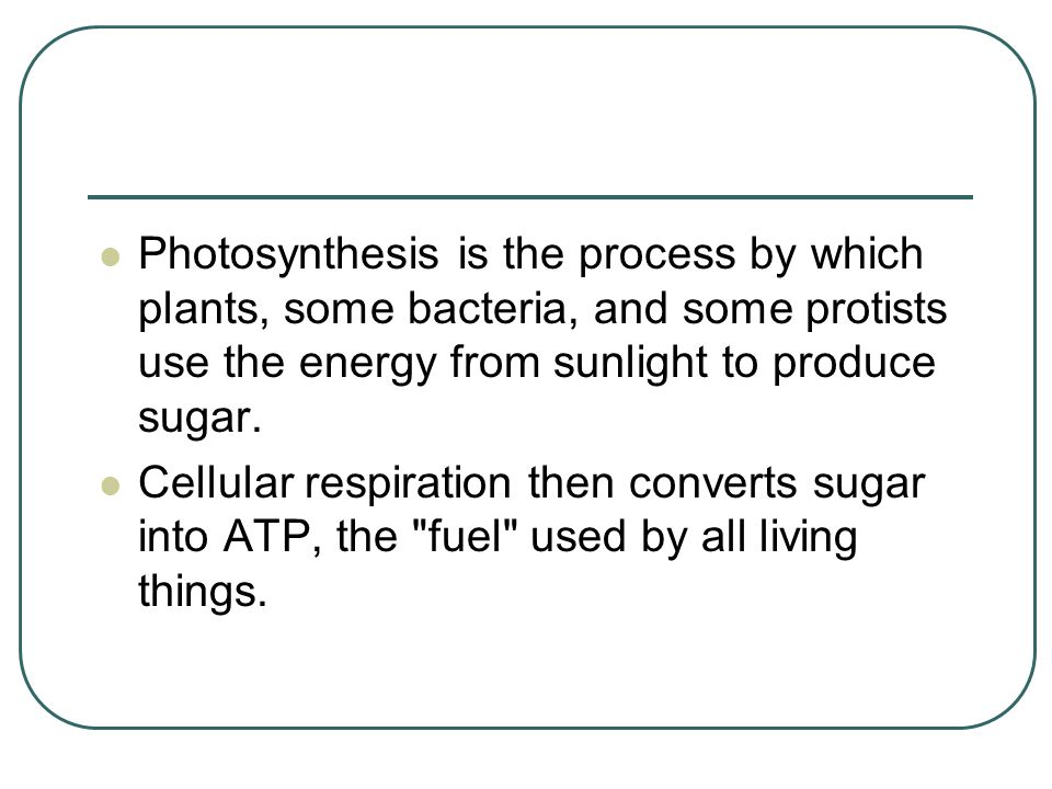 Photosynthesis is the process by which plants, some bacteria, and some protists use the energy from sunlight to produce sugar.