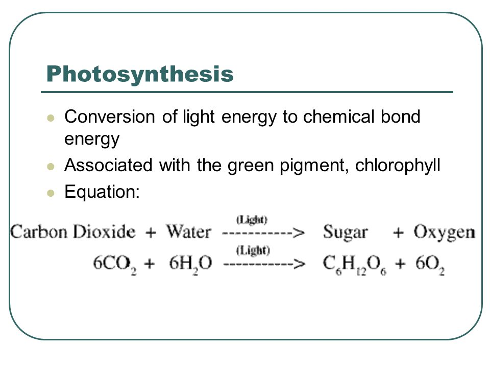 Photosynthesis Conversion of light energy to chemical bond energy
