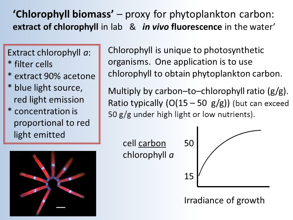 'Chlorophyll biomass' – proxy for phytoplankton carbon: