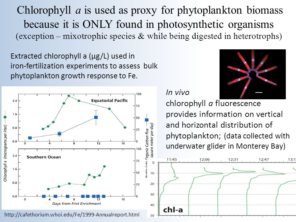 Chlorophyll a is used as proxy for phytoplankton biomass because it is ONLY found in photosynthetic organisms (exception – mixotrophic species & while being digested in heterotrophs)