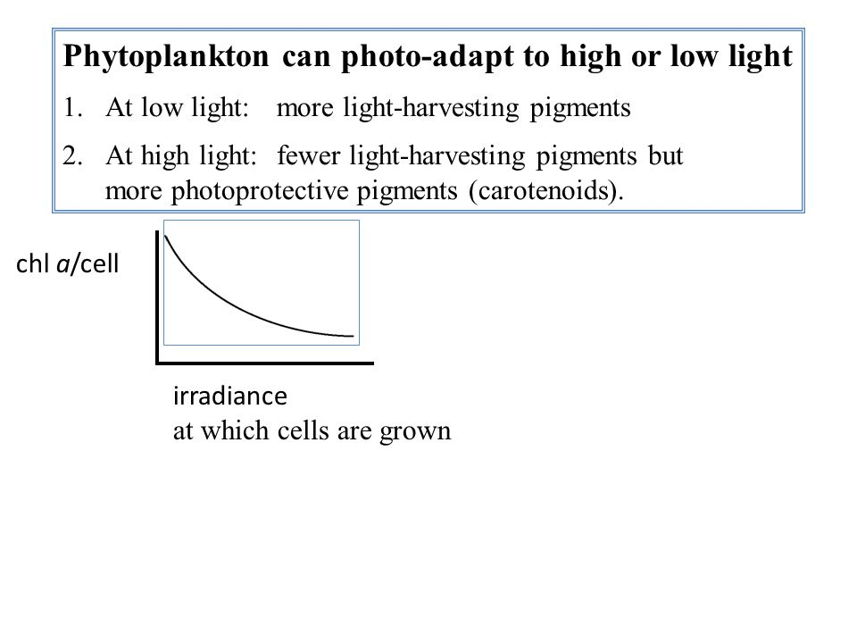 Phytoplankton can photo-adapt to high or low light