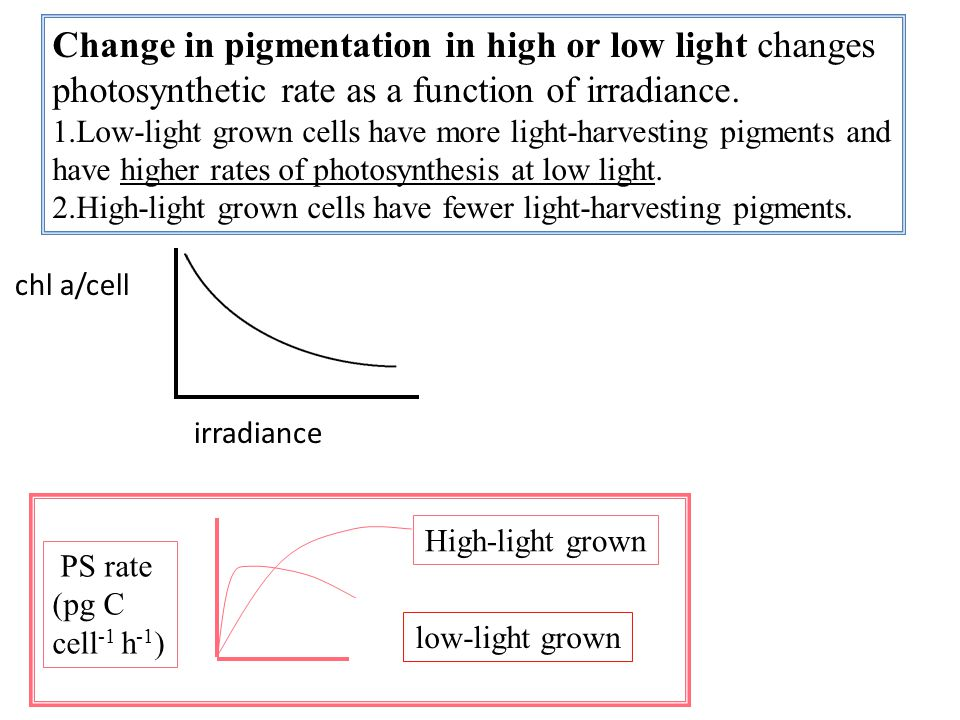 Change in pigmentation in high or low light changes photosynthetic rate as a function of irradiance.