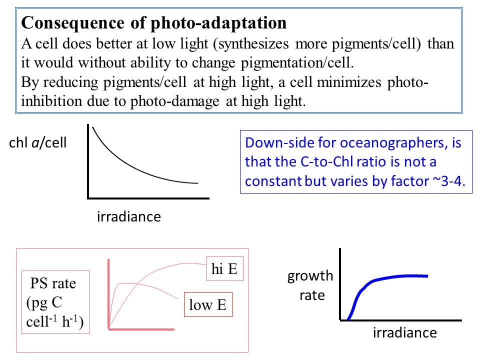 Consequence of photo-adaptation